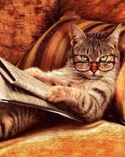 你瞅啥……书?