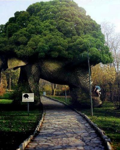 请不要想象一头大象:不是星座学,是心理学