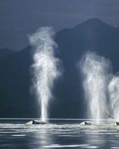 古人见过鲸鱼吗?